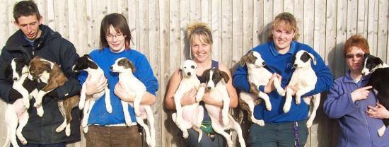 Staff & Puppies