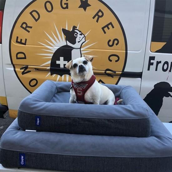 Wonder Dog Rescue - Logo