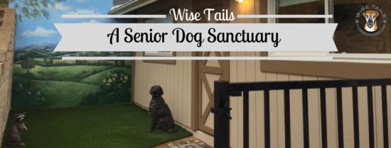 Wise Tails Senior Dog Sanctuary